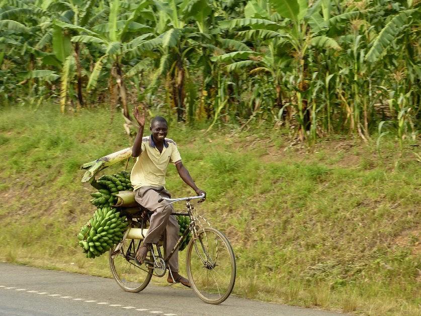 Zwaaiende man op fiets met bananen in Oeganda