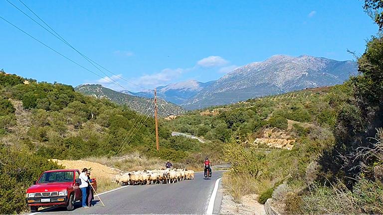 Carla fietst op zonnige dag over asfalt op haar Koga E-WTS fiets, in groene Griekse bergen, langs kudde schapen.