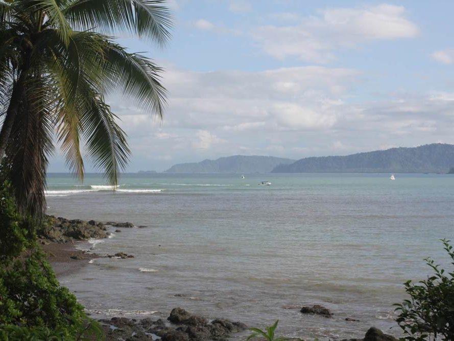 Palmboom aan zee op Costa Rica